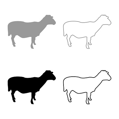 Sheep Ewe Domestic livestock Farm animal cloven hoofed Lamb cattle silhouette grey black color vector illustration solid outline style image