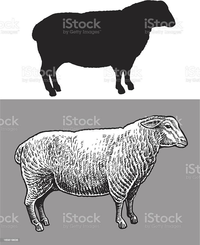 Moutons de la Ferme des animaux - Illustration vectorielle