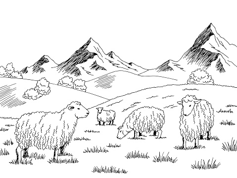 Sheep feeding grass in a meadow in the mountains graphic black white sketch illustration vector