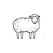 Vector hand drawn Sheep outline doodle icon. Sheep sketch illustration for print, web, mobile and infographics isolated on white background.