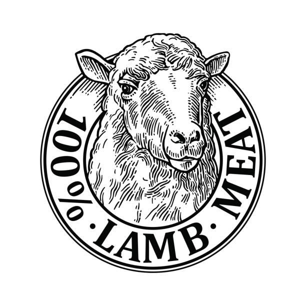 Tête de mouton. 100 wooll naturel lettrage. Illustration de gravure vector Vintage - Illustration vectorielle