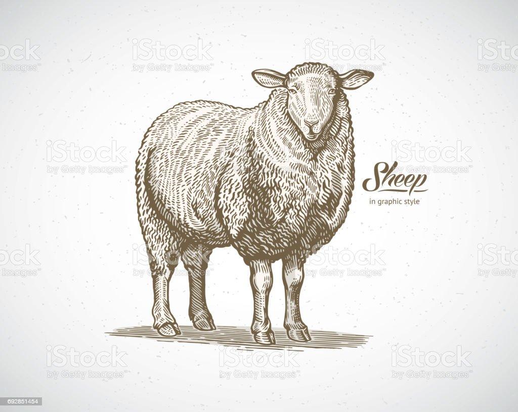 Moutons dans un style graphique - Illustration vectorielle