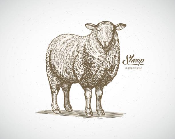 stockillustraties, clipart, cartoons en iconen met schapen in grafische stijl - schaap