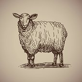 Sheep in sketch style.