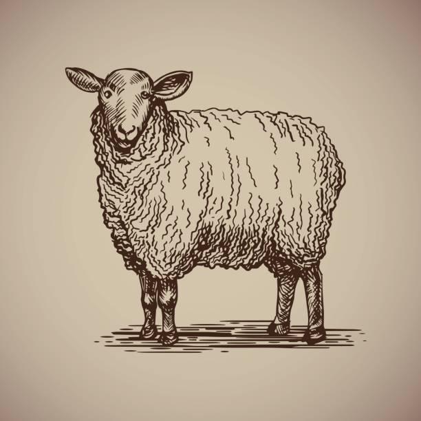 Moutons dans le style de croquis. - Illustration vectorielle