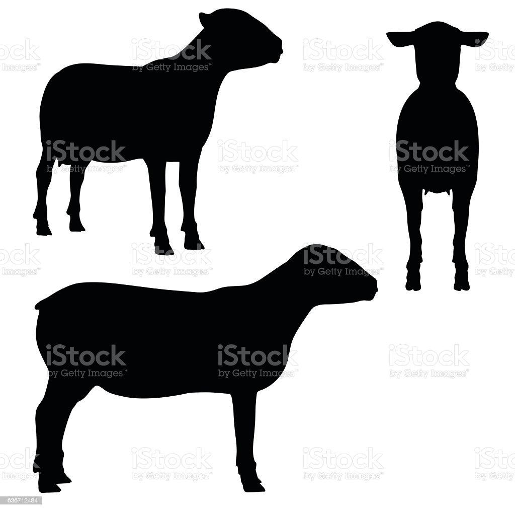 Sheep on white background vector art illustration