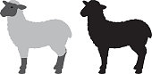 Vector silhouettes of a two sheep.