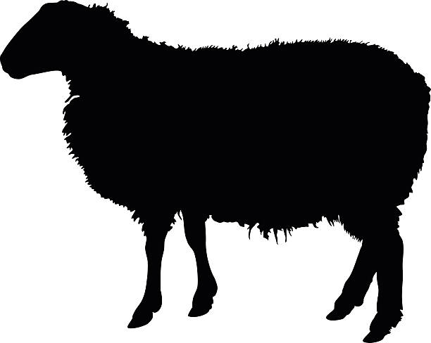 Best Herd Of Sheep Illustrations, Royalty-Free Vector ...