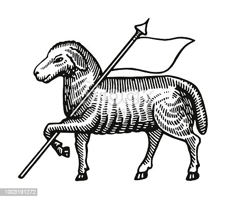 istock Sheep 1003191272