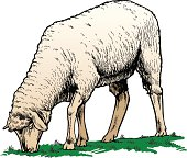 Illustration of sheep grazing.