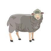 Sheep on white background. Vector illustration