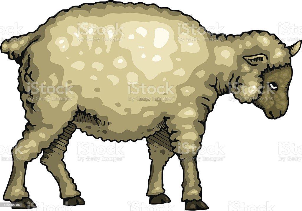 Pecore pecore - immagini vettoriali stock e altre immagini di agnello - animale royalty-free