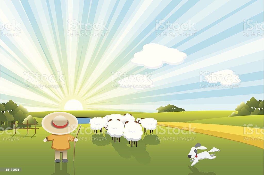sheeps and dog vector art illustration