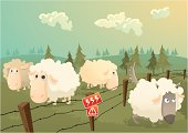 Sheeps in danger
