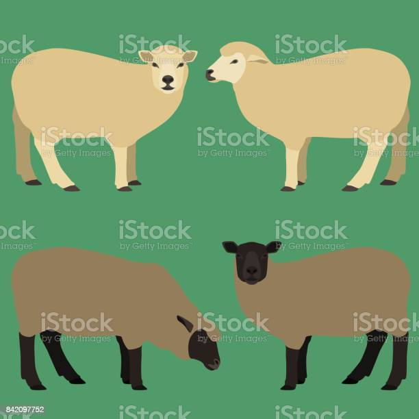 Sheeps in different poses vector id842097752?b=1&k=6&m=842097752&s=612x612&h=pn7jcpkvwhgqqo8xbf1lwvjsmf2a bqsuv5kpo6labq=