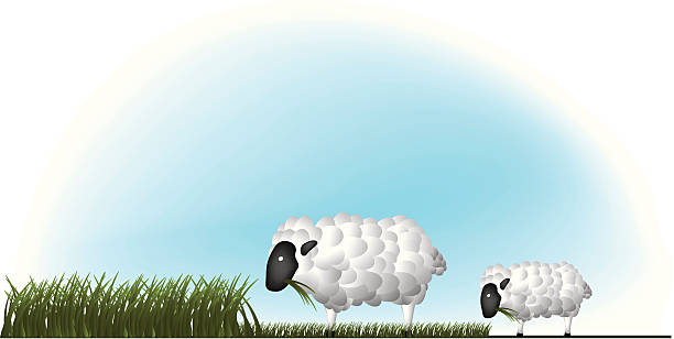 Sheeps in meadow vector art illustration