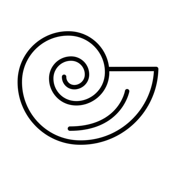 shell  conch   nautilus shell  conch   nautilus nautilus shell stock illustrations