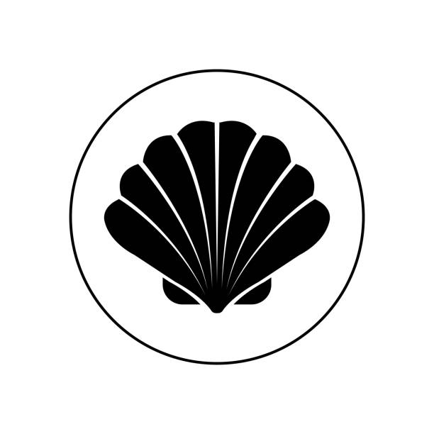 stockillustraties, clipart, cartoons en iconen met pictogram van de shell, de vector - zeeschelp