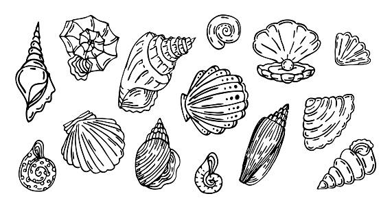 Shell, outline set,