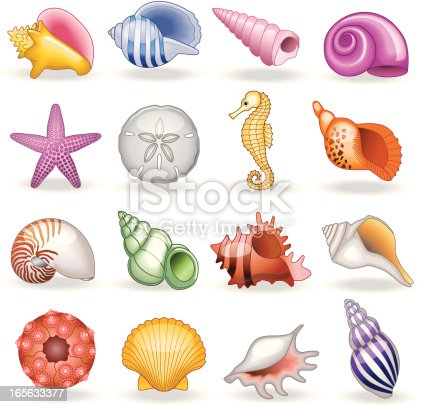 A vector illustration of seashells that you would find in a shell shop.