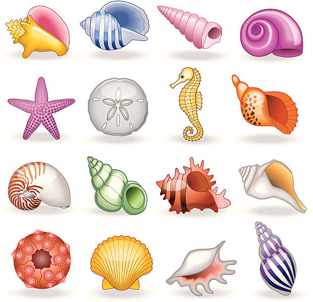 stockillustraties, clipart, cartoons en iconen met shell shop - zeeschelp