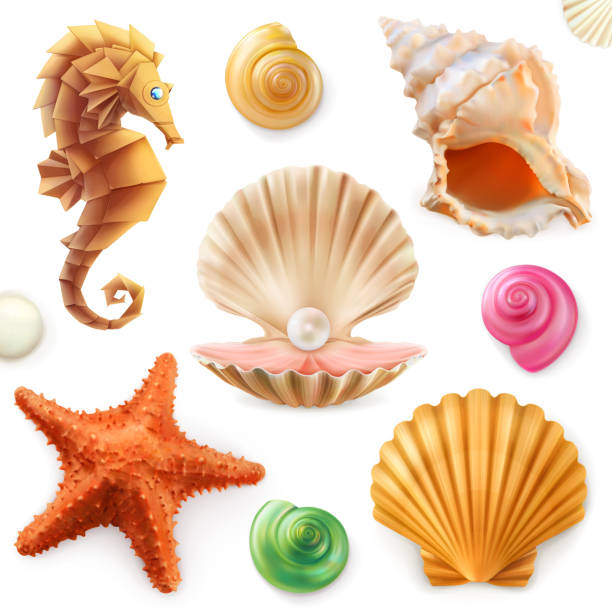shell, snail, mollusk, starfish, sea horse. 3d icon set - seashell stock illustrations, clip art, cartoons, & icons