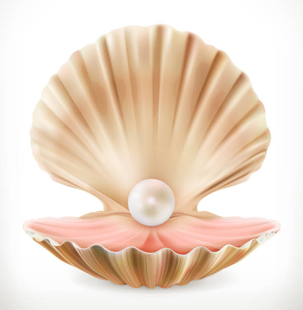 shell with pearl. clam, oyster 3d vector icon - pearl jewelry stock illustrations, clip art, cartoons, & icons