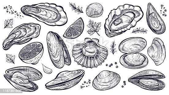 Shellfish seafood, vector hand drawn set. Different kinds of eatable mollusks. Oysters, mussels, scallop and other.