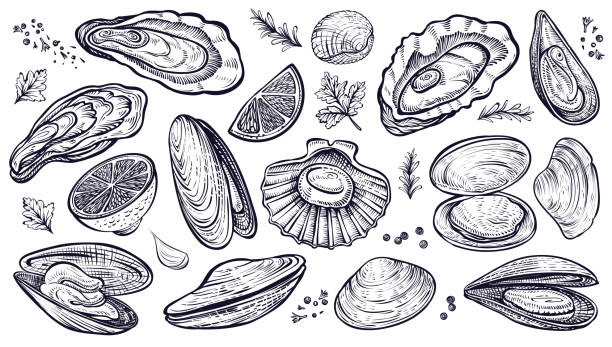 Shellfish seafood, vector hand drawn set. Oysters, mussels, scallop and other. Shellfish seafood, vector hand drawn set. Different kinds of eatable mollusks. Oysters, mussels, scallop and other. seafood stock illustrations