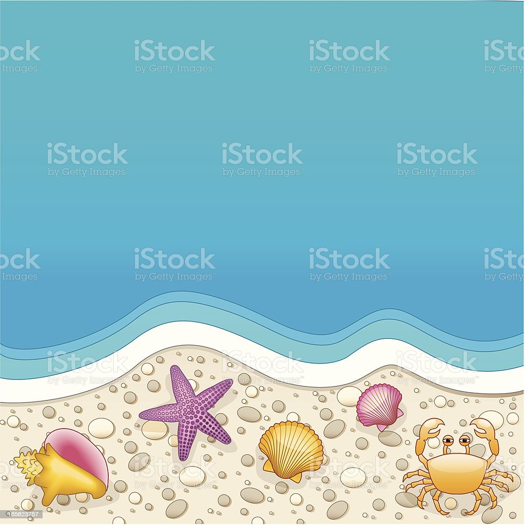 shells on the beach vector art illustration