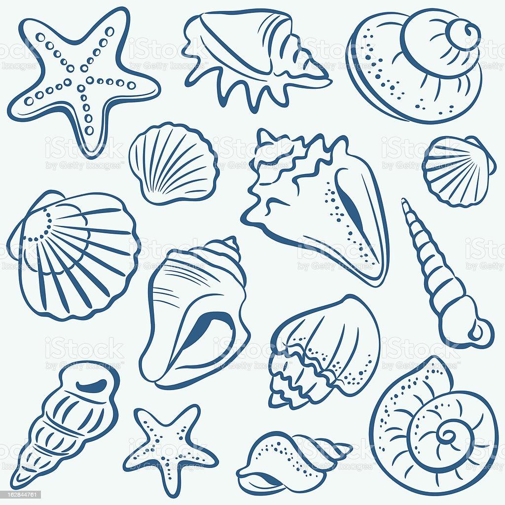 Shells royalty-free stock vector art