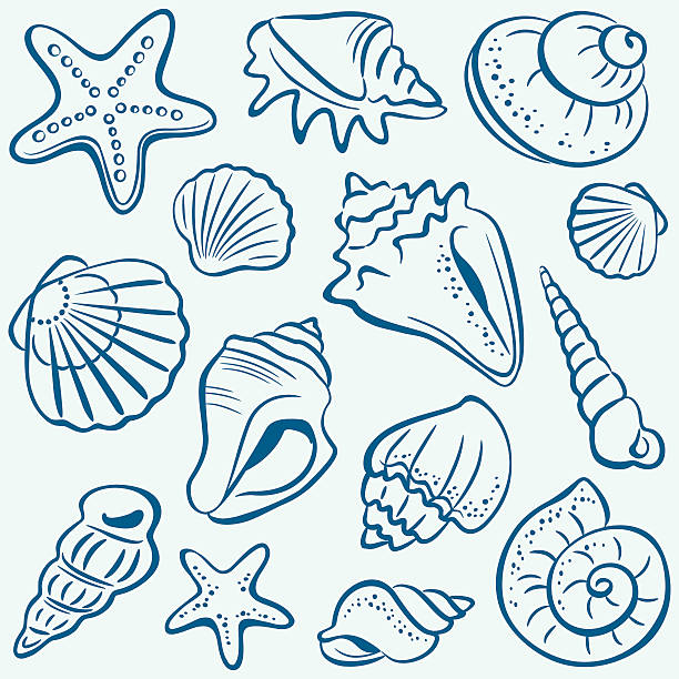stockillustraties, clipart, cartoons en iconen met shells - zeeschelp