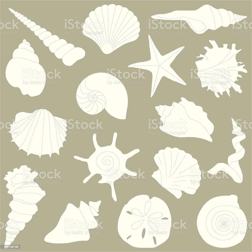 Shells vector art illustration