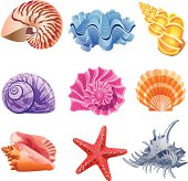 Icon set with 9 colorful mollusc's shells. In CMYK format, ready to print.