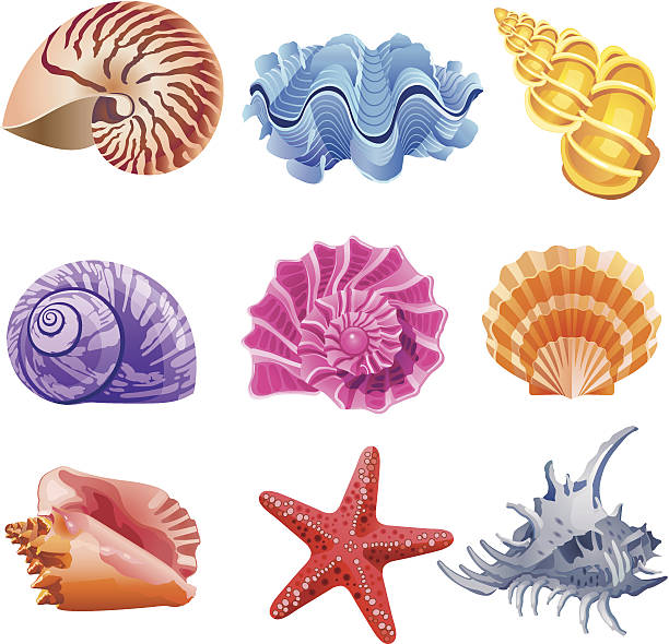 shells - seashell stock illustrations, clip art, cartoons, & icons