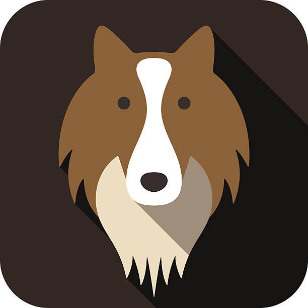 shetland sheepdog hund gesicht flat-design - collie stock-grafiken, -clipart, -cartoons und -symbole