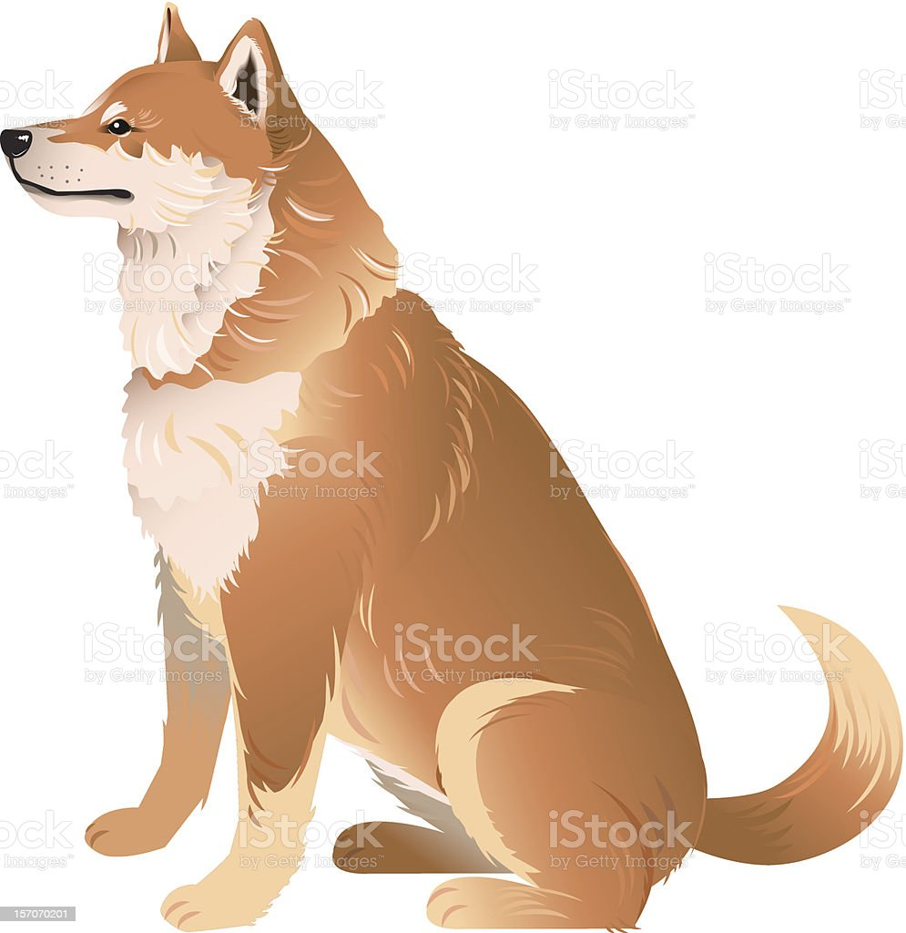 Shiba Inu - Japanese Small Size Dog royalty-free stock vector art