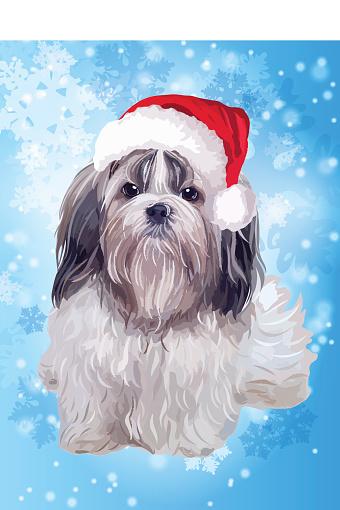 Shih tzu dog in santa hat