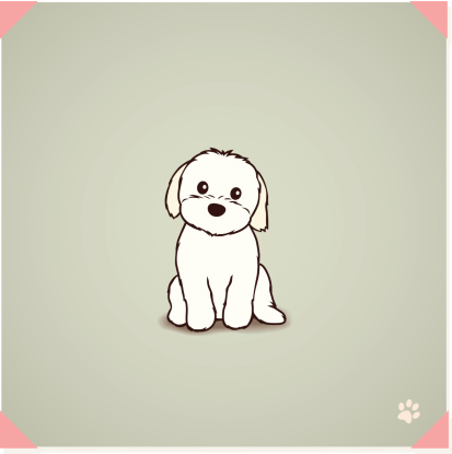 Shih Tzu Maltese Mix Puppy