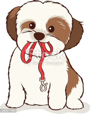 Cute spotted Shih Tzu puppy with leash in mouth waiting to go for a walk