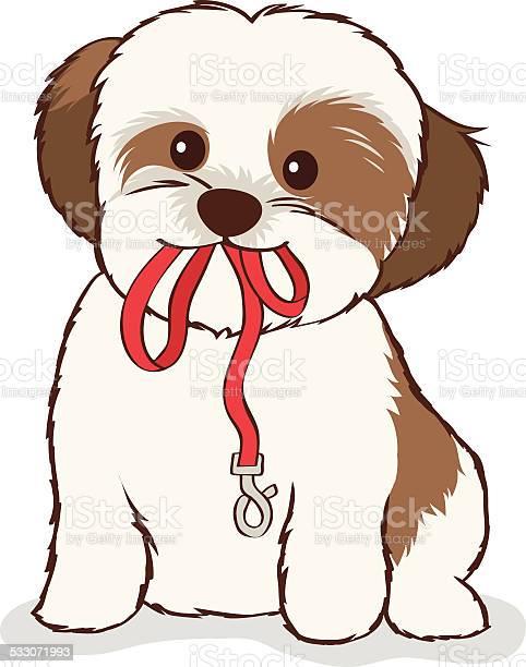Shih tzu puppy with leash in mouth vector id533071993?b=1&k=6&m=533071993&s=612x612&h=j7oelehxuyqouchh ibcmaha9f69jsjob2fxsd0i km=