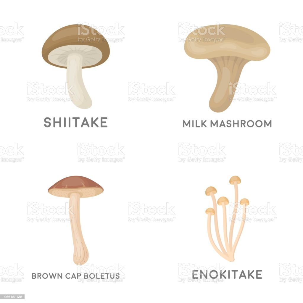 Shiitake, brown cap boletus, enokitake, milk. set collection icons in cartoon style vector symbol stock illustration web. - Royalty-free Brown stock vector
