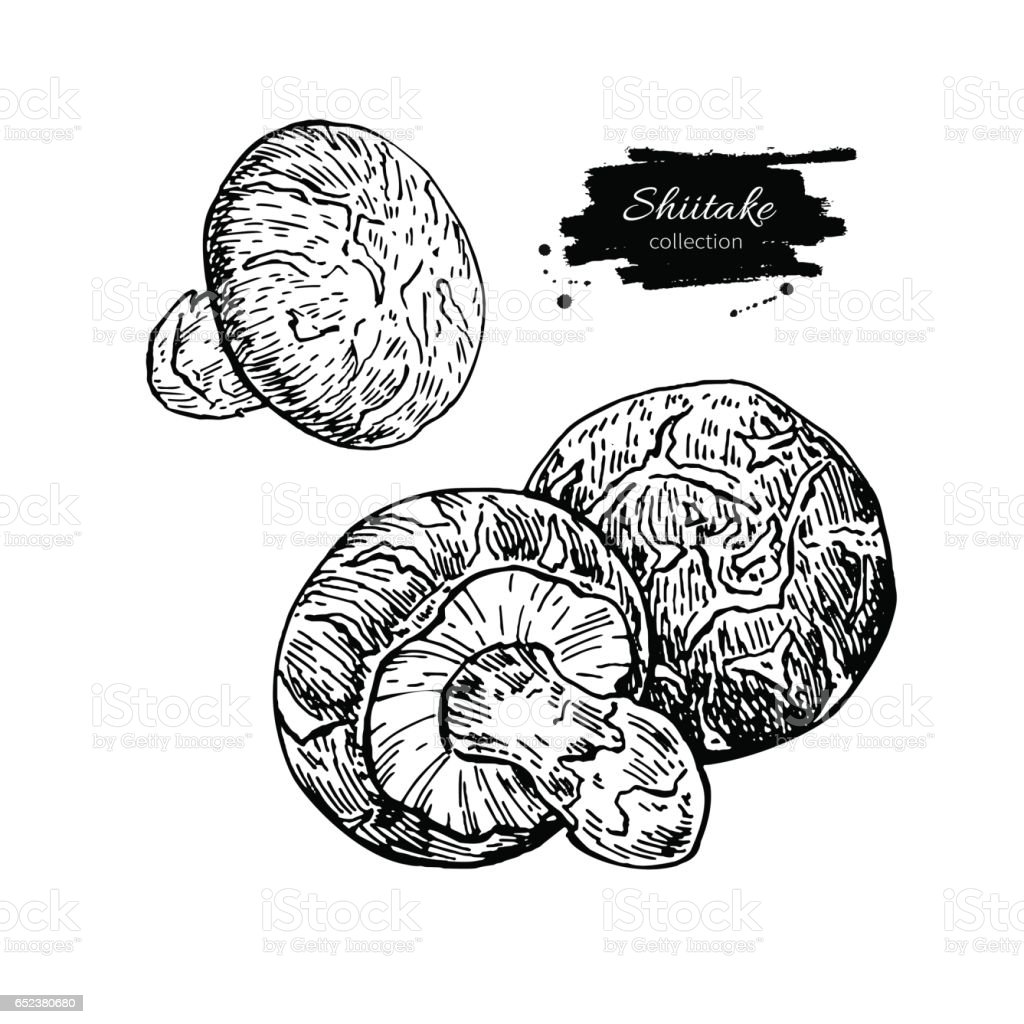 Shiitake Pilz Hand Gezeichnetvektorillustrationset Skizze Kuche