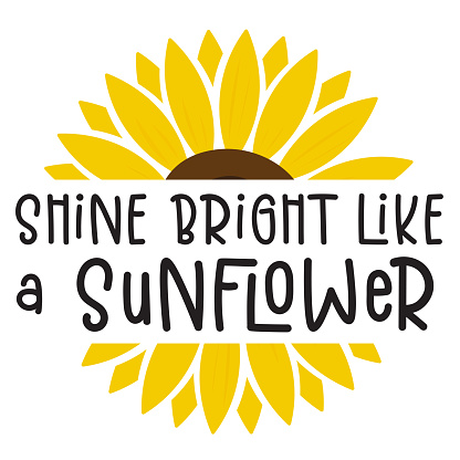Shine Bright like a sunflower isolated on white background. Cute Draw Flower design. For t shirt, greeting card or poster design Background Vector Illustration.