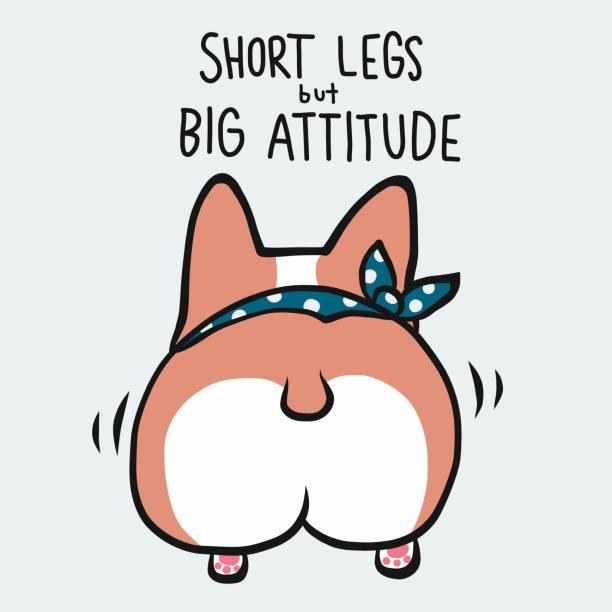 bildbanksillustrationer, clip art samt tecknat material och ikoner med korta ben men stor attityd corgi hund tecknad vektor illustration - bum