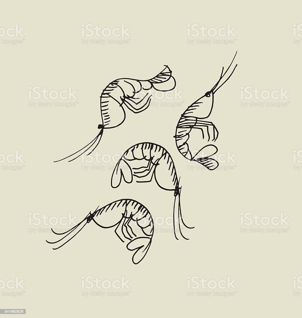 shrimp and prawn image. food hand drawn sketch vector illustrati vector art illustration