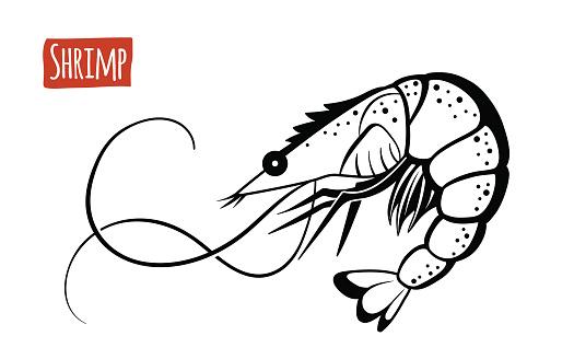 Shrimp, vector cartoon illustration