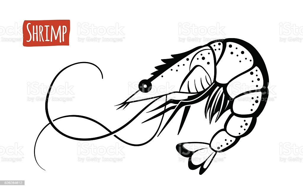 Shrimp, vector cartoon illustration vector art illustration