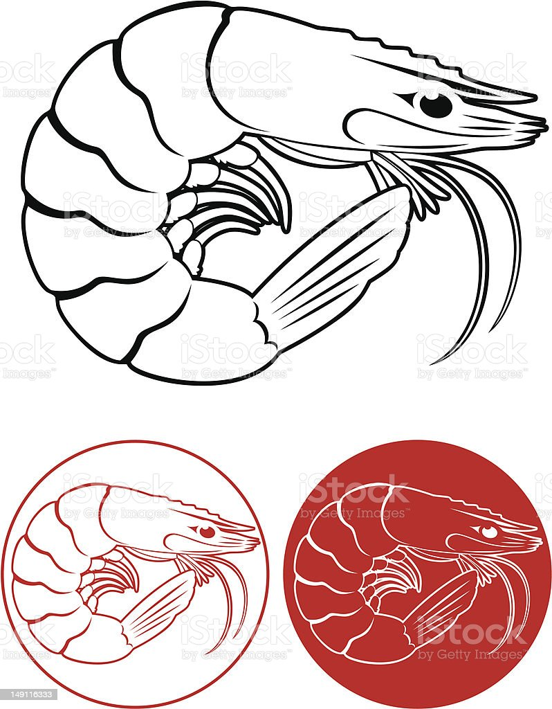 shrimp stock vector art more images of animal 149116333 istock rh istockphoto com What Are Brine Shrimp Brine Shrip