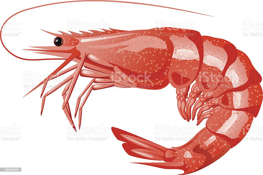 Shrimp vector art illustration